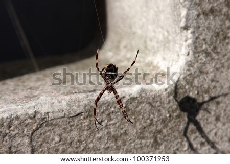 A spider dangling from a silk strand