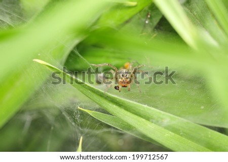 A spider in the green leaf