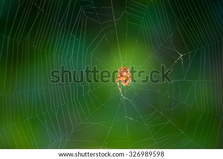 A spider on a spider web on green background - stock photo