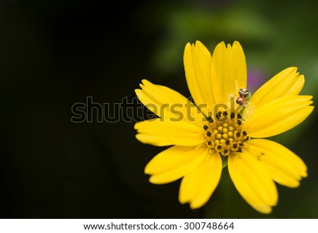 A spider resting on a yellow flower - stock photo