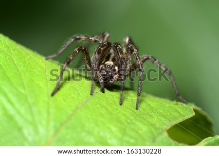 A spider to stay on the leaves