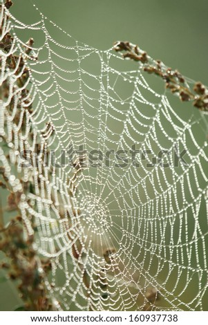 A spider web covered with morning dew