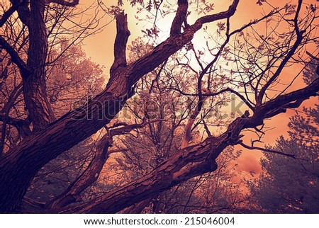 A spooky low angle shot of an oak tree with few leaves on the branches.  Photographed with a 665nm infrared converted camera and toned.  - stock photo