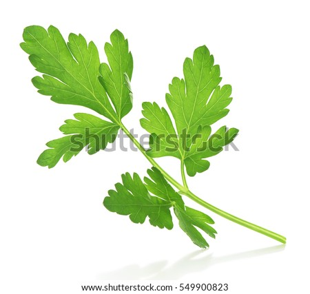 a sprig of parsley in the air falls on an isolated white background