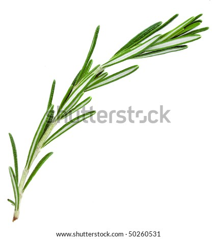 A sprig  rosemary , the herb  isolated on white background - stock photo