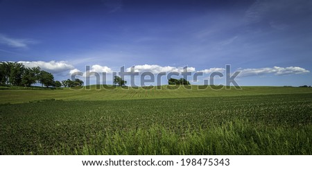 A spring field with young plants, blue sky, white clouds, and trees
