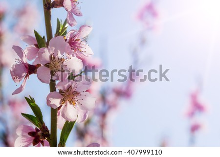 a spring pink flowers backgrounds - stock photo