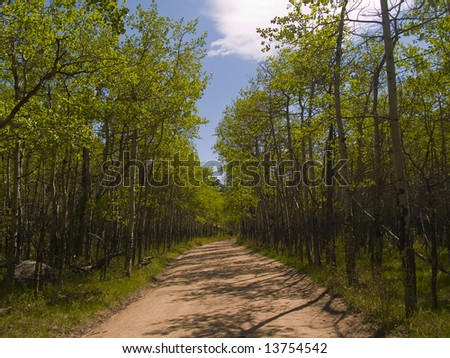 A Spring road through the forest on a warm later afternoon. - stock photo