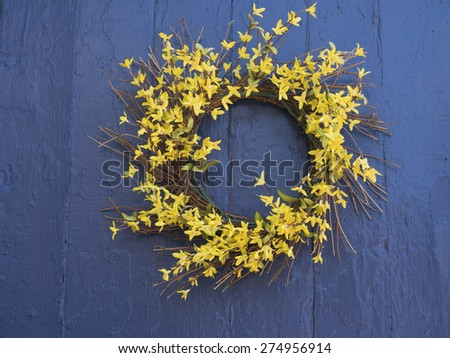 A Spring wreath of yellow forsythia on a blue door. - stock photo
