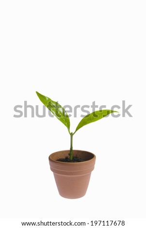 A Sprout In A Flower Pot