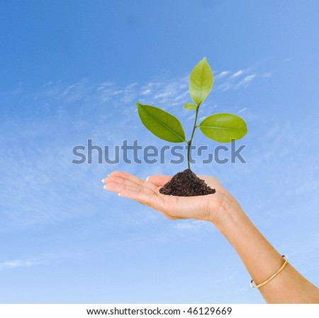 A sprout in hand as a symbol of nature protection