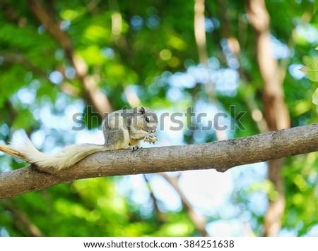 A Squirrel eating fruit in public garden - stock photo