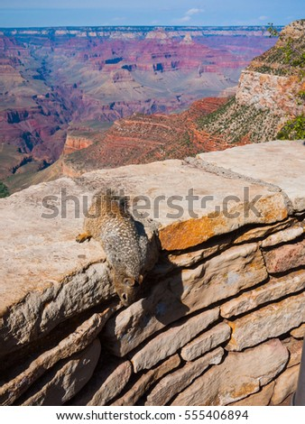 A squirrel on the edge of a rock wall next to The Grand Canyon, Arizona