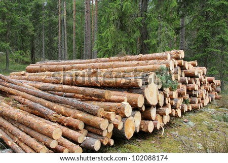 A stack of pine logs in green coniferous forest. - stock photo