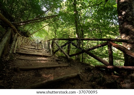 A stairway made of tree branches going steep up a mountain and covered by tree aisle of tree tops