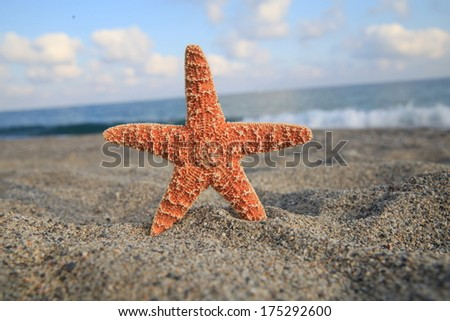 A starfish besides sea shore on a beach - stock photo
