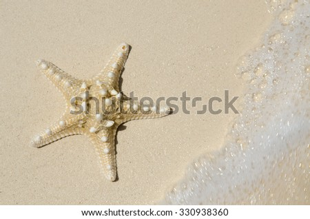 A starfish in the white sand of Cancun as the tide water of the ocean washes in