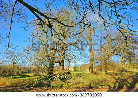 A storm damaged tree in winter near to Painswick, The Cotswolds, Gloucestershire, England, UK - stock photo
