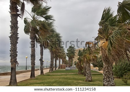 a storm wind stirred the palms of the coast - stock photo
