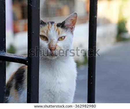 A stray cat posing near a gate in Istanbul Turkey. - stock photo