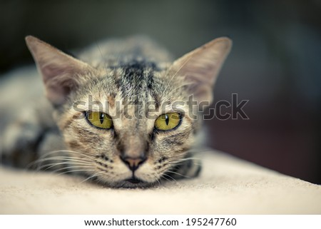 A stray cat walking on a wall - stock photo