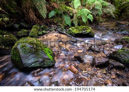 A stream flowing through a rainforest - stock photo