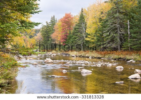 A stream in the woods in the Autumn in New England