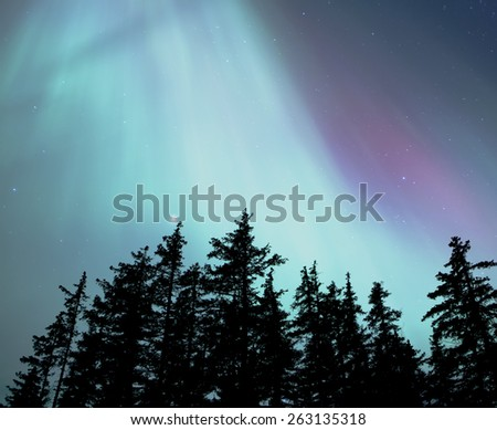 A stream of aurora borealis (northern lights) rising over a spruce forest in Alaska. - stock photo