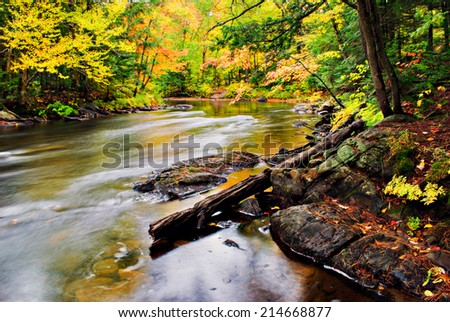 A stream runs though a colorful forest during the autumn season.