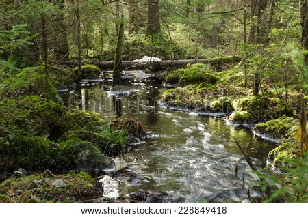 A streaming creek in an untouched, old-growth and mossy coniferous forest - stock photo