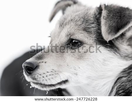 A street dog. - stock photo