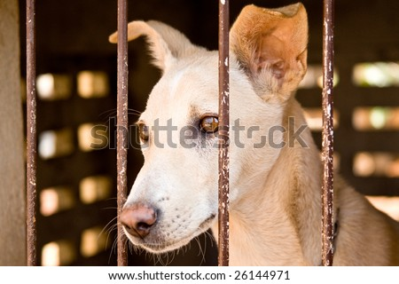 A street dog behind bars in a dog pound in India.