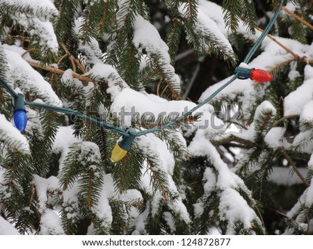 A string of outdoor Christmas lights hangs from the branches of a snowy evergreen tree.