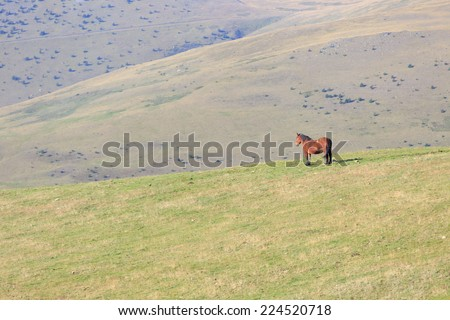 A strong Lonely horse stays on a green grassy mountain slope high in the Spanish Pyrenees