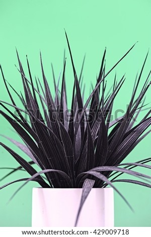 A studio photo of an artificial indoor plant - stock photo