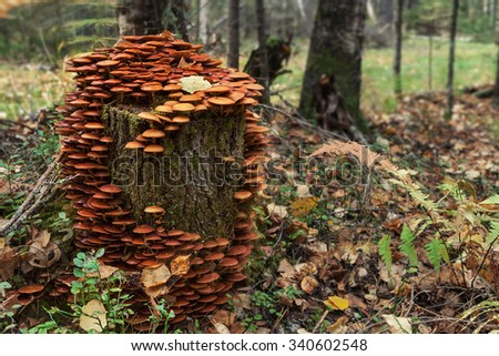 A stump covered with mushrooms - stock photo