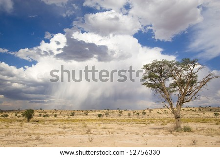 A stunning Kalahari scene with a cloudy storm in the background and large tree in the foreground