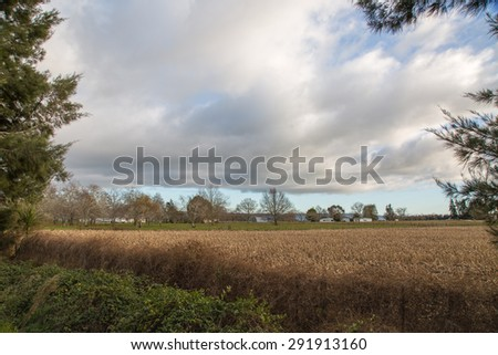 A stunning scene in early winter of the farmlands in the Bay of Plenty area of New Zealand. The golden tones of the recently harvested corn are a dramatic contrast against the bold clouds of the sky. - stock photo