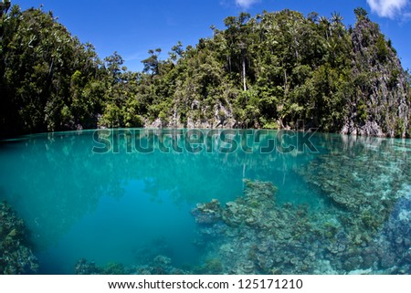 A submerged sink hole makes a protected nursery for juvenile reef fishes in Raja Ampat, Indonesia. - stock photo