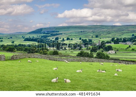 A summer day in Wensleydale, North Yorkshire, England, two foreground sheep looking at camera. Photo shows the fields divided by the dry stone walls for which the area is famous.