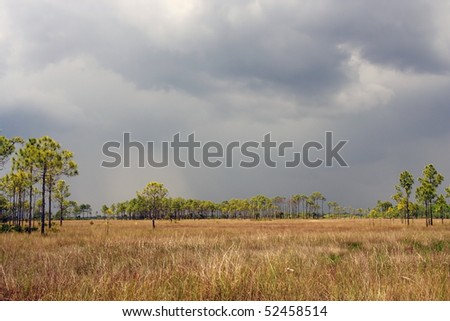 A summer storm approaches, Big Cypress National Preserve - stock photo