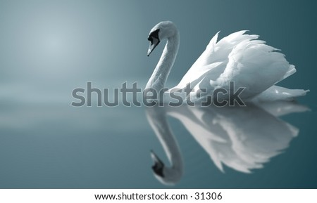 A Swan - stock photo