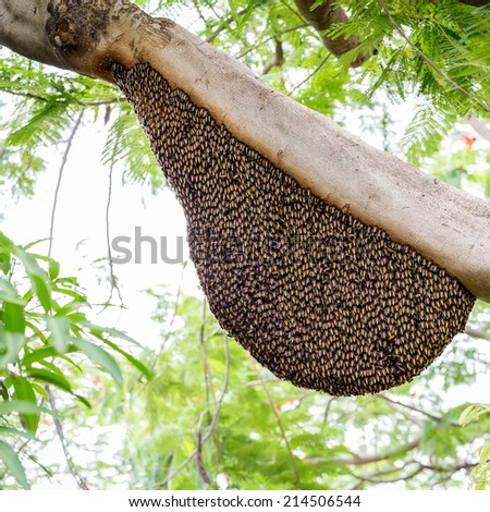 A swarm of honey bees clinging to a tree - stock photo