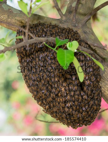 A swarm of Thailand honey bees clinging to a tree  - stock photo