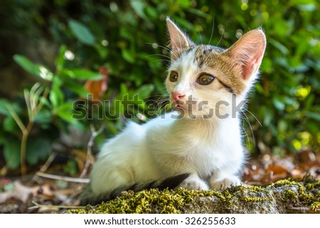 A sweet and adorable little white cat sitting on the ground outdoors.