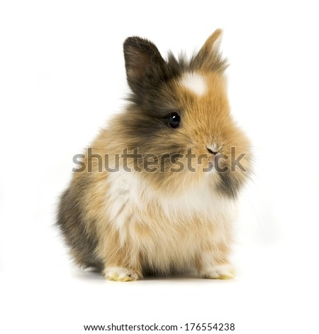 A sweet and furry brown rabbit sitting all alone.