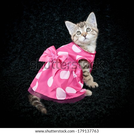 A sweet kitten wearing a cute little pink poke a dot dress on a black background.
