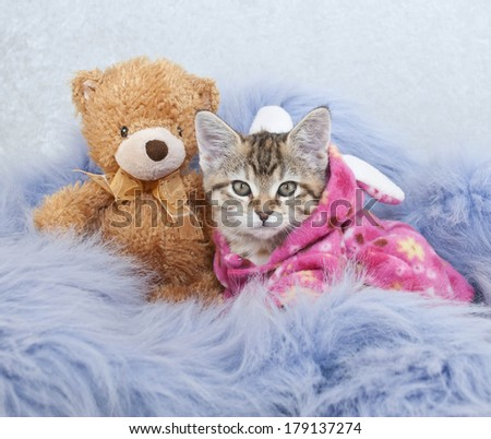 A sweet kitten wearing P.J.'S laying with a teddy bear on a purple blanket. - stock photo