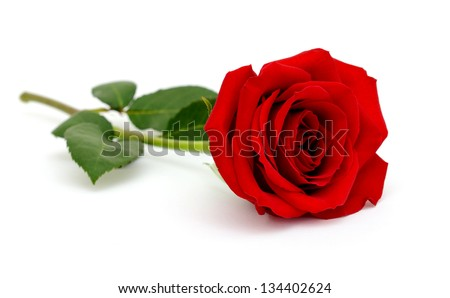 A sweet love red rose on white - stock photo