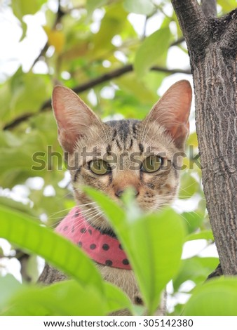 A tabby cat on the tree and staring to us